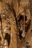 Jaskinia Niedźwiedzia Górna - autor Maciek