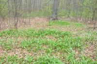 Rezerwat Pazurek - 20.04.2014